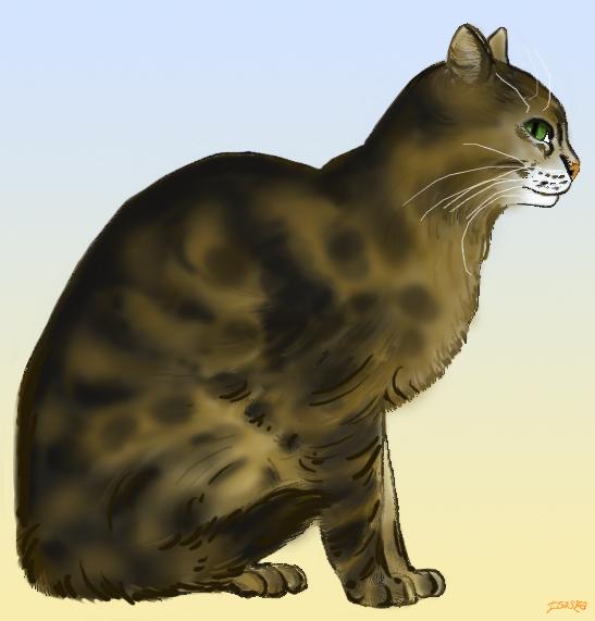 Dessins de félins Cat10