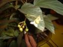 Début des floraisons Hataco10