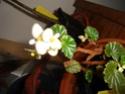 Début des floraisons Schmid10