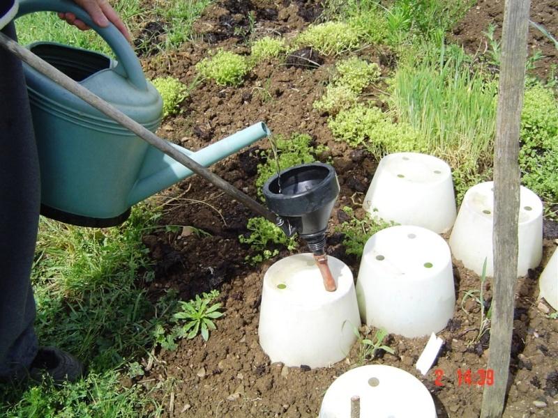 Arrosage: économisons l'eau Dsc08011