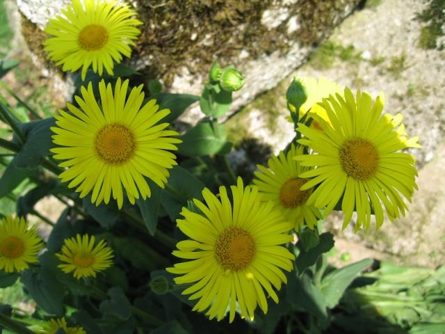 Fleurs dans le Morvan Img_0011