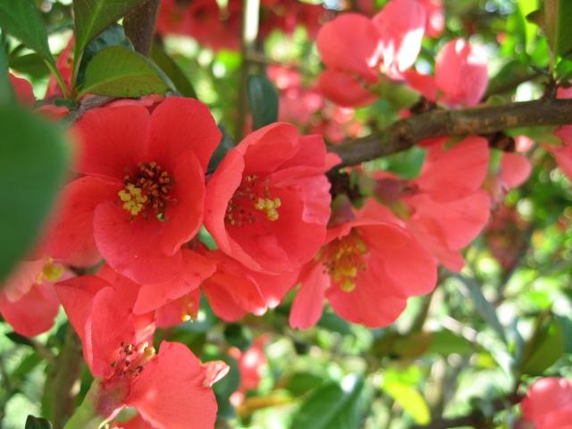 Fleurs dans le Morvan Img_0012