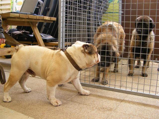 Photos de la porte ouverte à POINT DOG hier !!!! Photo_14
