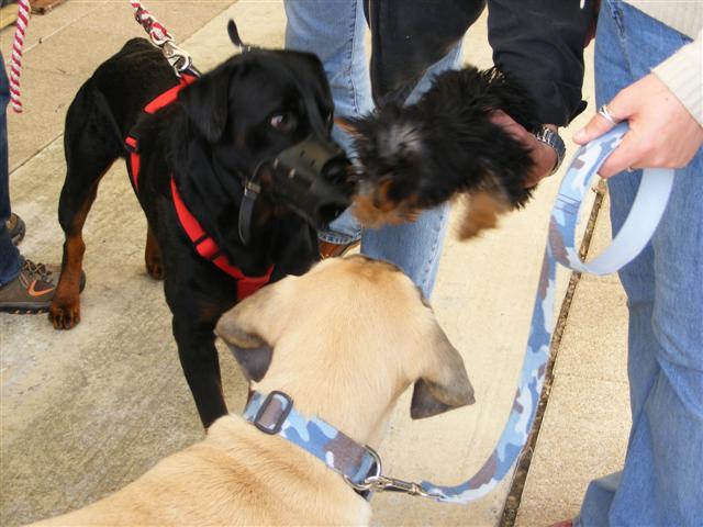Photos de la porte ouverte à POINT DOG hier !!!! Photo_21