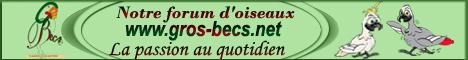 Forum sur les Gros Becs (crochus)... Petite10
