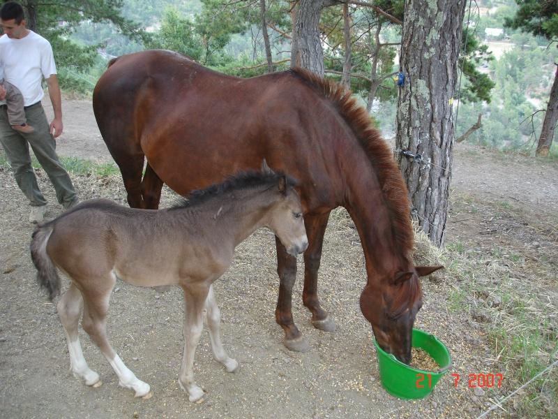 Iarann Stud., l'élevage de Fer Dsc04710