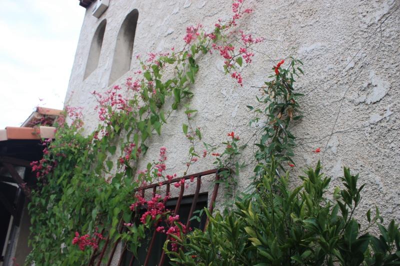 Bignone rose = Podraena ricasoliana encore en fleurs - Page 2 Fin_ep10