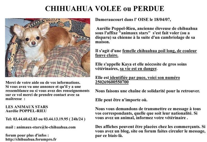 Kaya petite chihuahua! 07041910