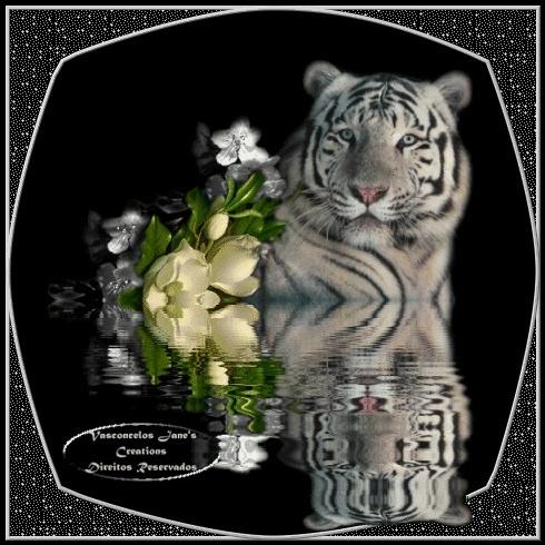 bonjour - Page 11 Tigre110