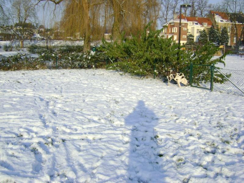 De la neige pour les prochains jours et durant cet hiver. Dsc05010