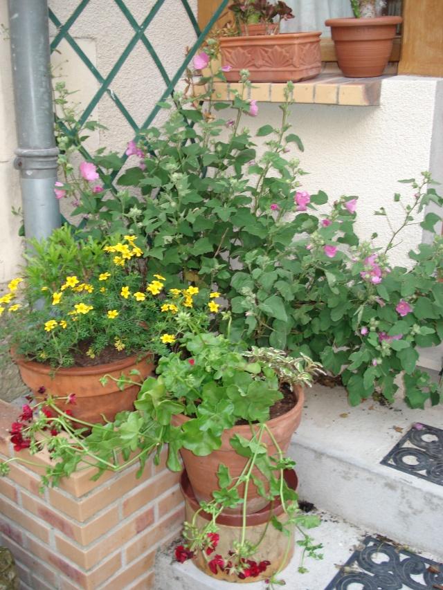 le jardin de Giroflee 1_juin11