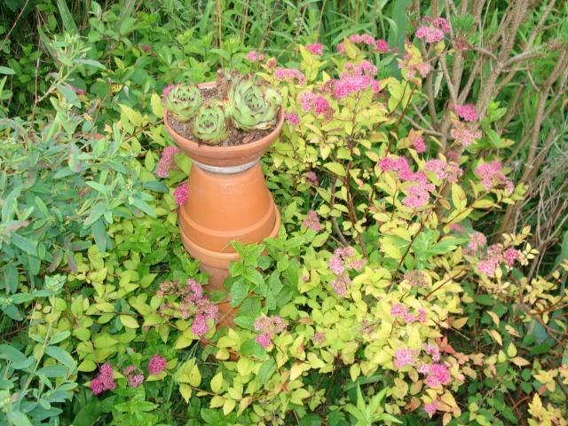 le jardin de Giroflee 1_juin16