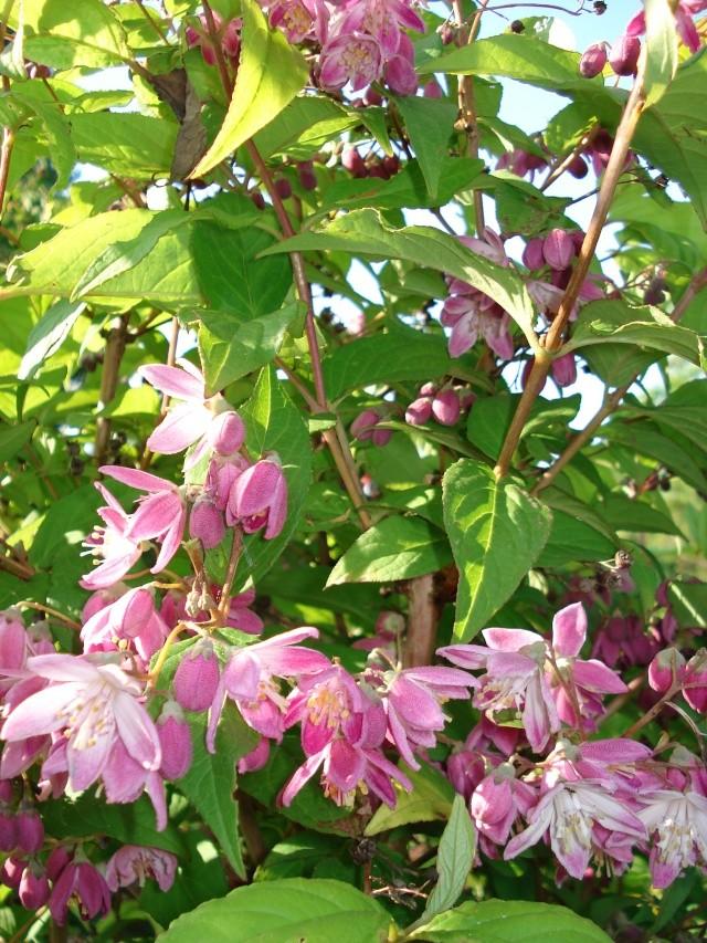 le jardin de Giroflee 22_mai10