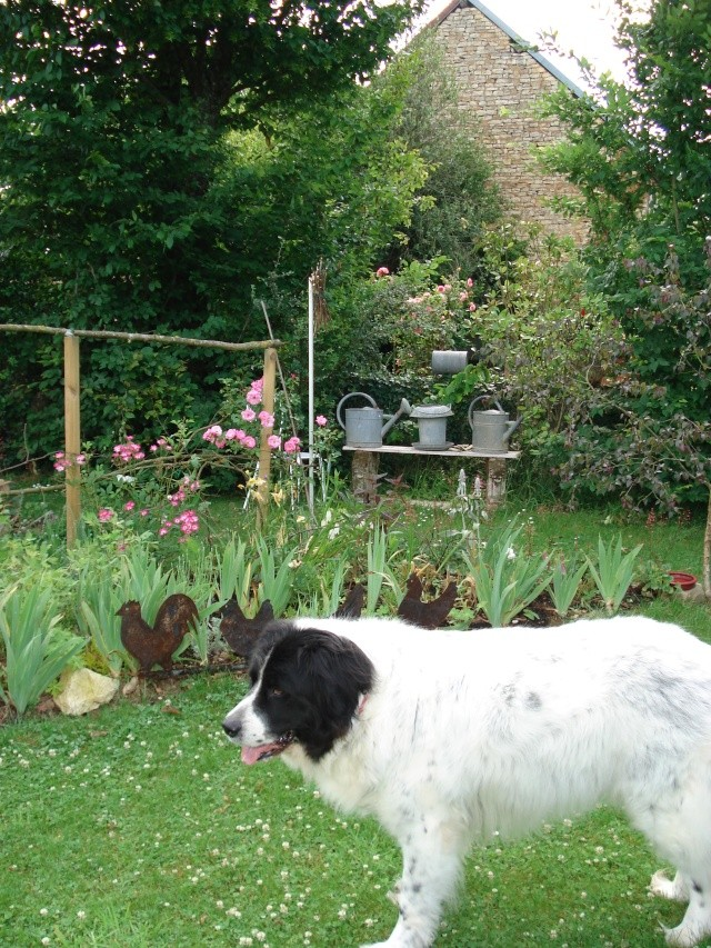 le jardin de Giroflee - Page 2 5_juin22