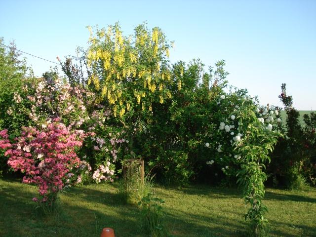 le jardin de Giroflee Jardin40