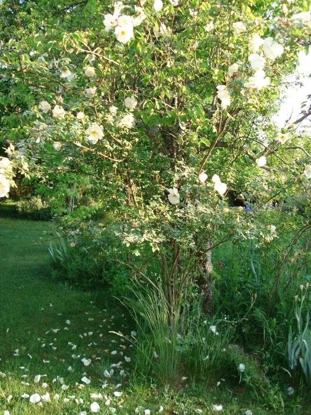le jardin de Giroflee Jardin43