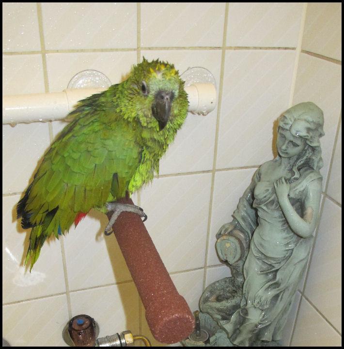 Concours photo n°14: Nos oiseaux prennent le bain  Pour_c10