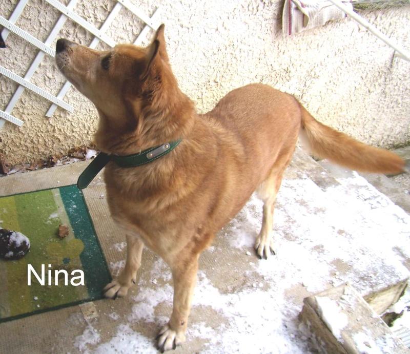 Au secours : A 13 ans NINA va aller au refuge en fin de semaine (26) Nina_210