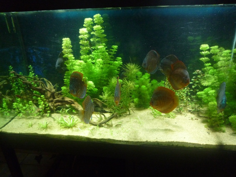 Mes bacs et me poissons Bac_di10