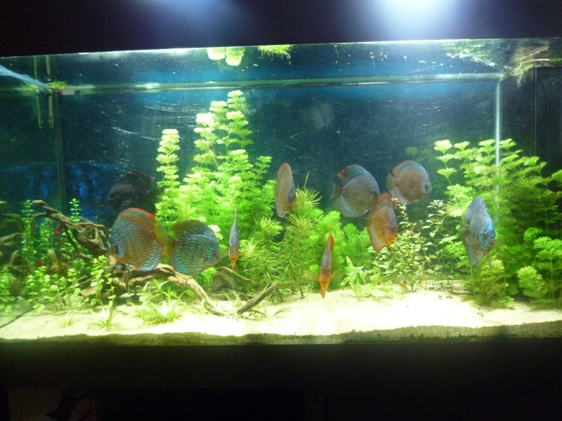 Mes bacs et me poissons Bac_di11