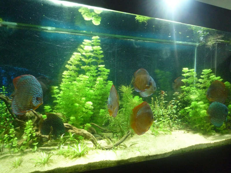 Mes bacs et me poissons Bac_di14