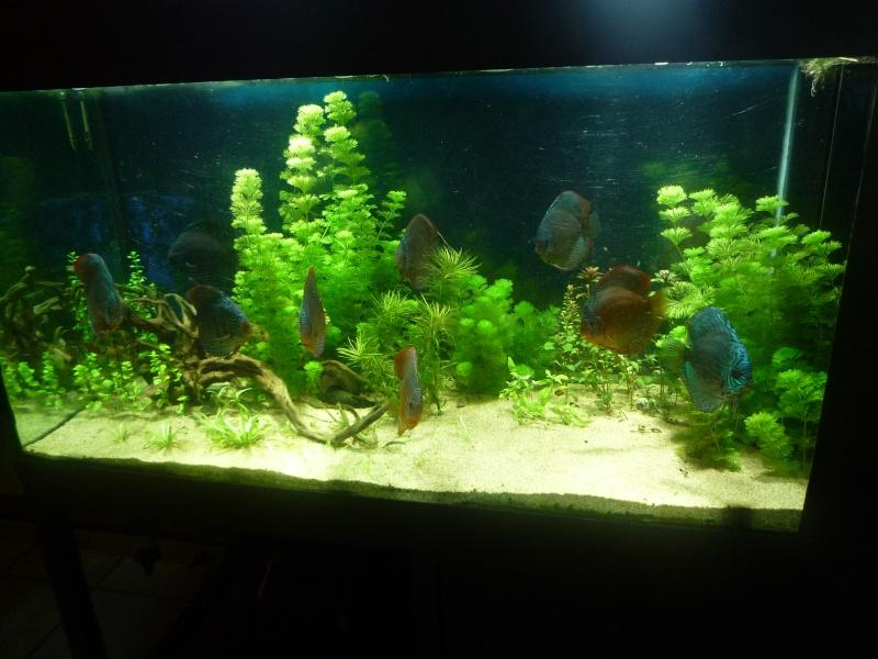 Mes bacs et me poissons Bac_di15