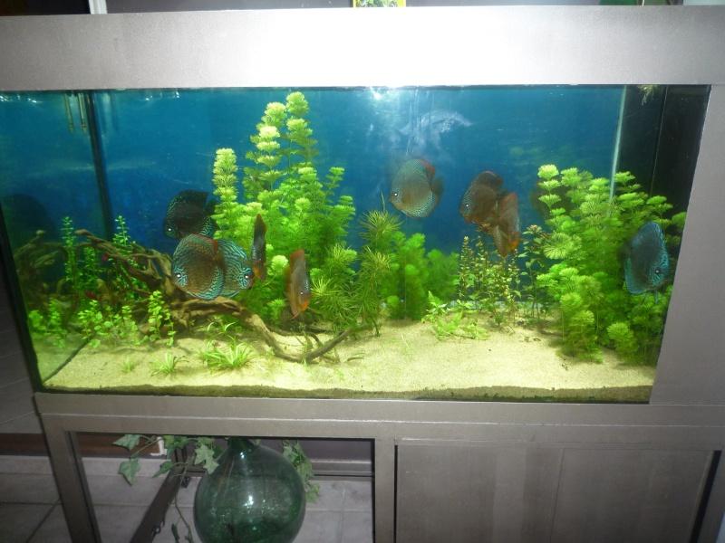 Mes bacs et me poissons Bac_di16