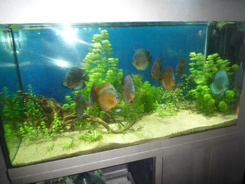 Mes bacs et me poissons Bac_di17