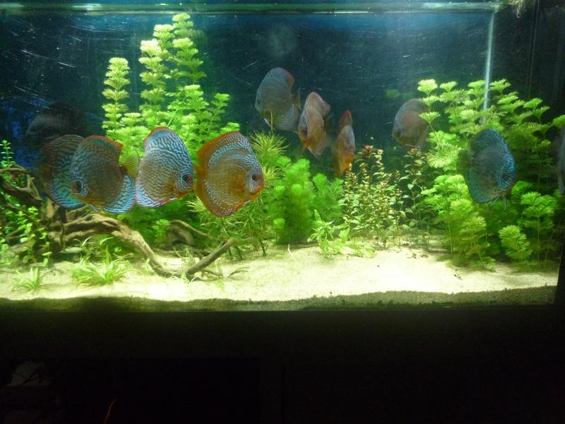 Mes bacs et me poissons Bac_di18