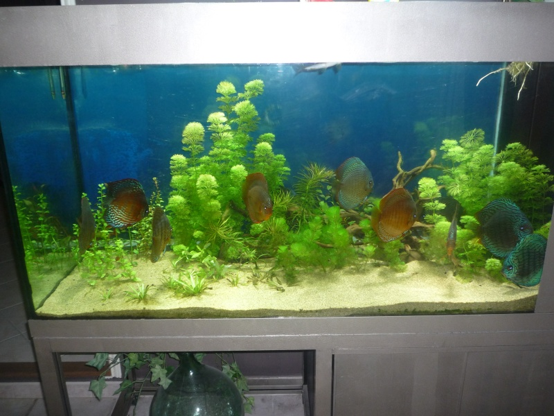 Mes bacs et me poissons Evo_ba10