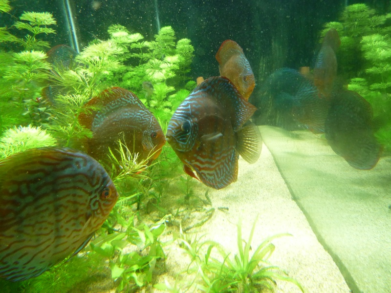 Mes bacs et me poissons Evo_ba13
