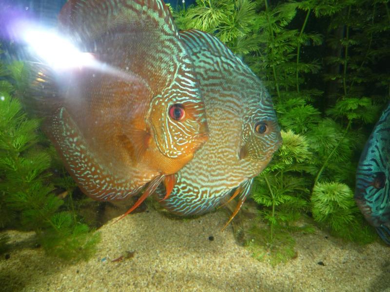Mes bacs et me poissons Evo_ba22