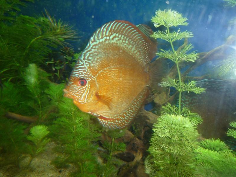 Mes bacs et me poissons Evo_ba24