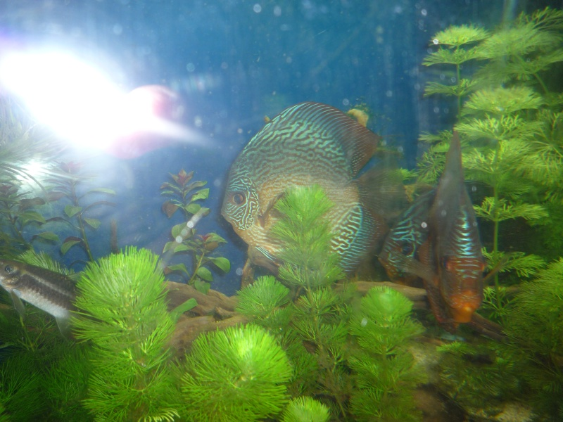 Mes bacs et me poissons Evo_ba25