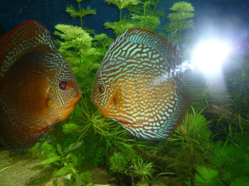 Mes bacs et me poissons Evo_ba26