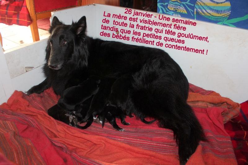 """Des """"louveteaux""""  pour Vauxane ! Img_5310"""