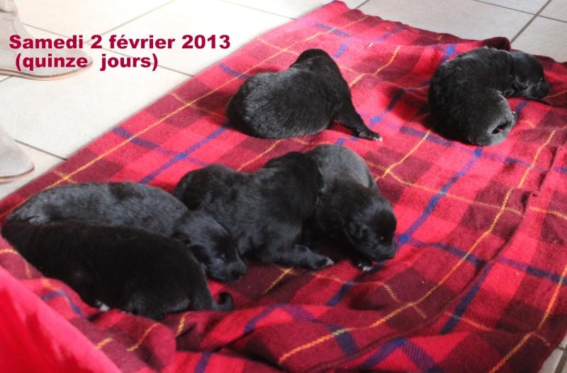 """Des """"louveteaux""""  pour Vauxane ! Img_5421"""