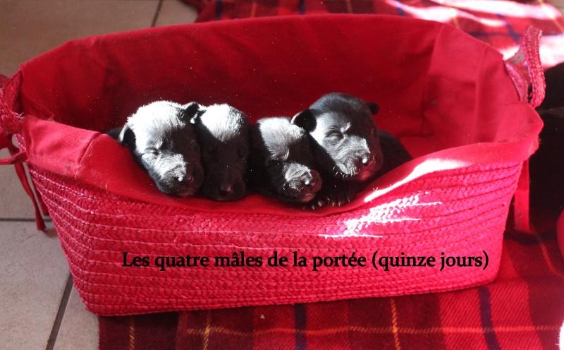 """Des """"louveteaux""""  pour Vauxane ! Img_5422"""