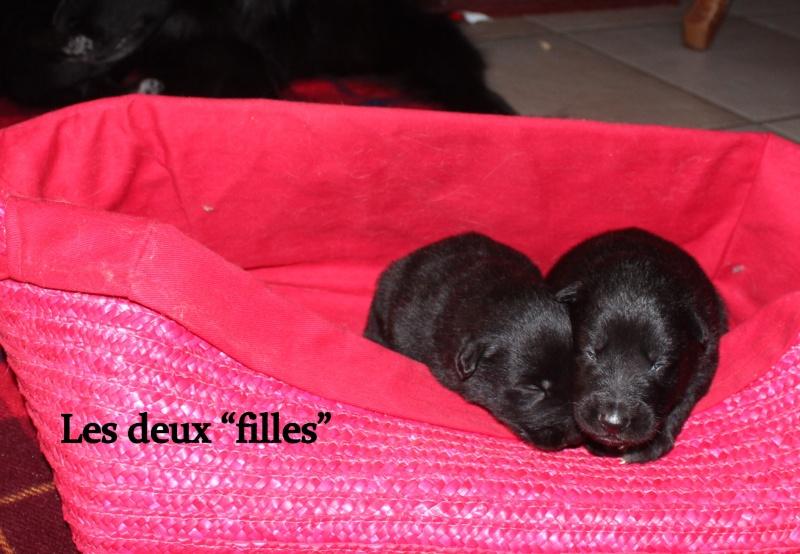 """Des """"louveteaux""""  pour Vauxane ! Img_5423"""
