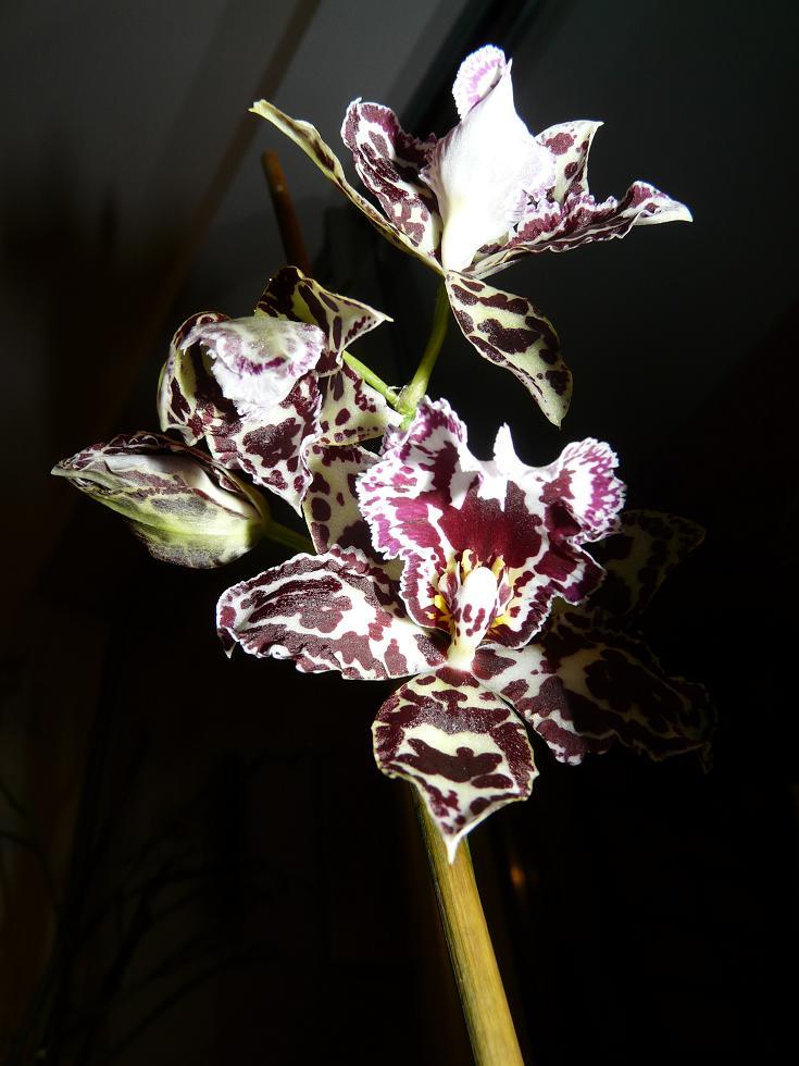 Floraison du moment P1060650