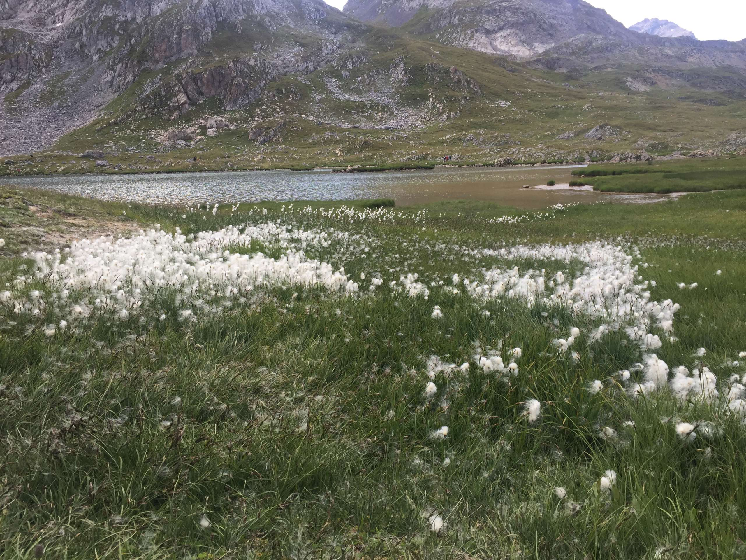 Petites balades en Rhône-Alpes - Page 2 Img_1519
