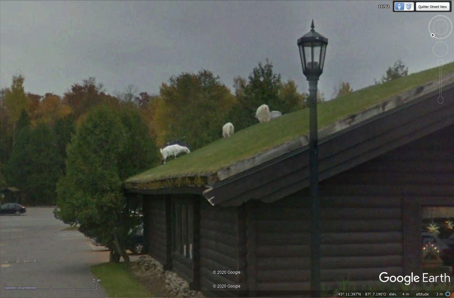 STREET VIEW : chèvres sur un toit de restaurant, Sister Bay, Wisconsin - États-Unis Tsge1282