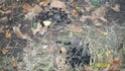 Les insectes auxiliaires, amis de votre jardin 100_3211