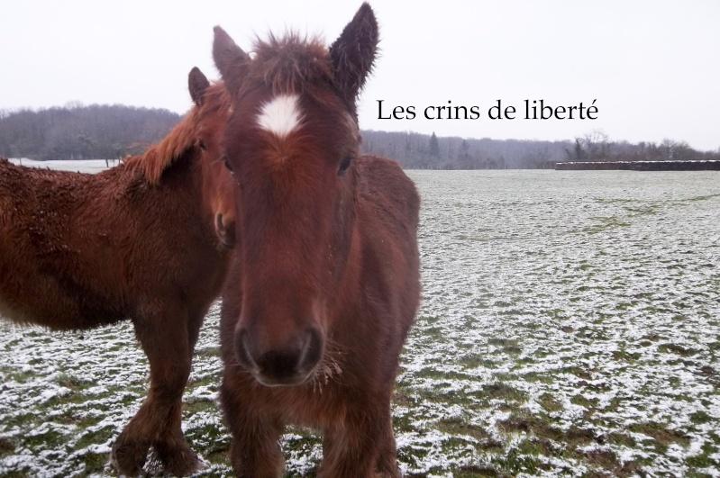 Dpt 70 - Cidjy de la Fontaine - ONC Comtoise - Sauvée par elise-et-delice (Mars 2013) - Page 2 104_3115