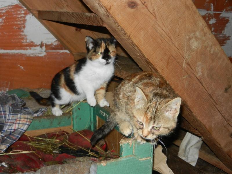 Dpt 48 - Aumont - 2 chatons femelles, tricolore et tigrée - Coryza - En soin...  Dscn4011