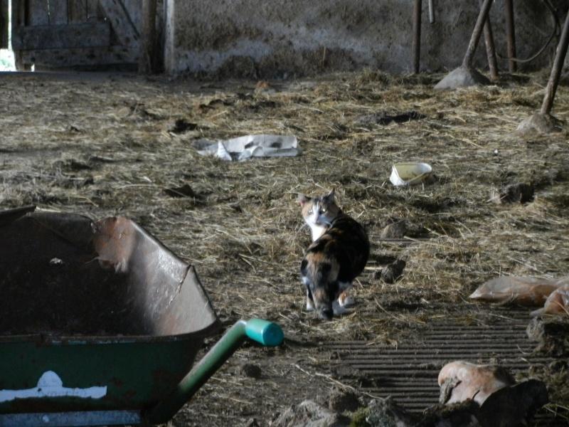 Dpt 48 - Aumont - 2 chatons femelles, tricolore et tigrée - Coryza - En soin...  Dscn4014
