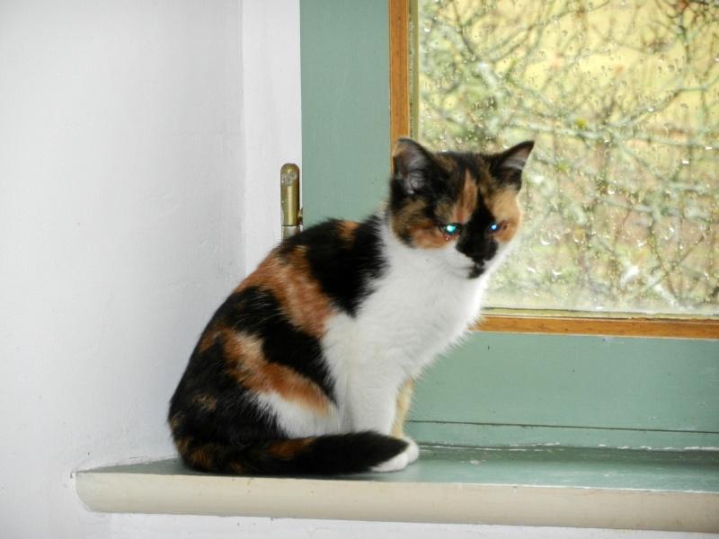 Dpt 48 - Aumont - 2 chatons femelles, tricolore et tigrée - Coryza - En soin...  Dscn4111