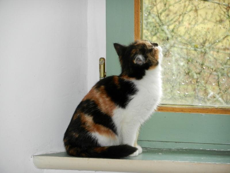 Dpt 48 - Aumont - 2 chatons femelles, tricolore et tigrée - Coryza - En soin...  Dscn4112
