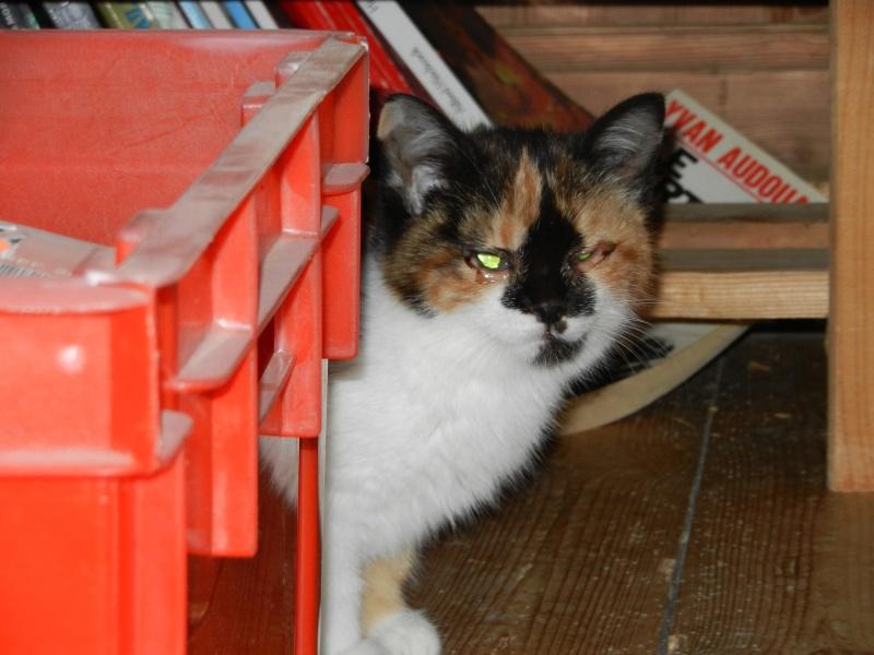 Dpt 48 - Aumont - 2 chatons femelles, tricolore et tigrée - Coryza - En soin...  Dscn4114