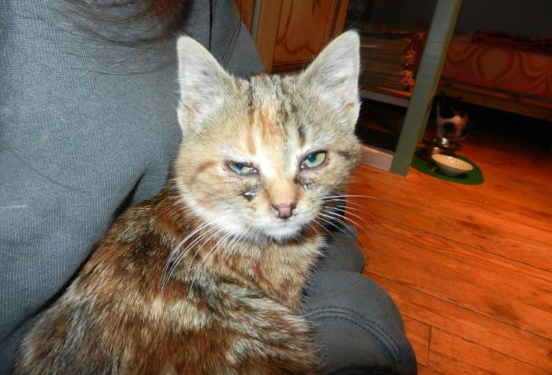 Dpt 48 - Aumont - 2 chatons femelles, tricolore et tigrée - Coryza - En soin...  Dscn4117